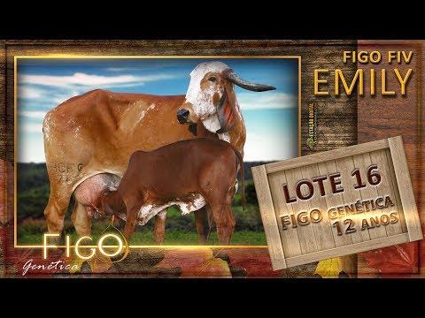 LOTE 16 - FIGO FIV EMILY