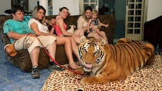Video Living With Tigers: Family Share Home With Pet Tigers MP3, 3GP, MP4, WEBM, AVI, FLV Mei 2017