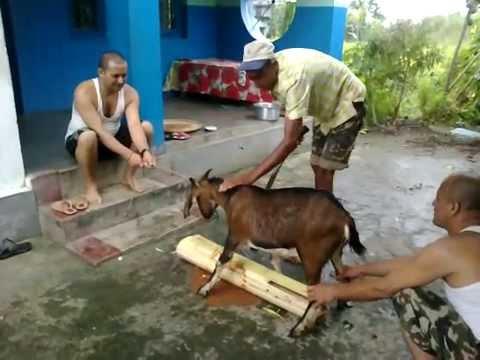 Goat's Head Cut Off in Dashain