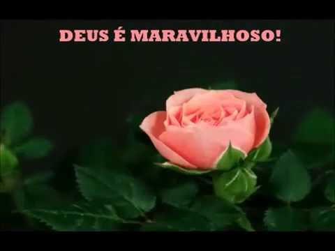 Mensagens lindas - Lindas flores se abrindo - Bela mensagem