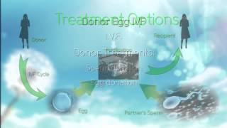 Fertility Treatment Guide Video