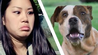 Video People Meet Pit Bulls For The First Time MP3, 3GP, MP4, WEBM, AVI, FLV April 2018