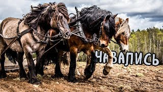 Почему мы измеряем мощность в лошадиных силах и никак иначе