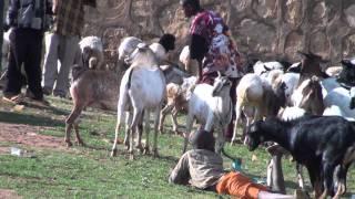 Oromia Livestock Market