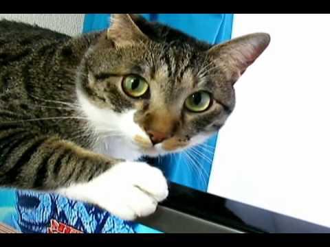 「薄型液晶テレビが居心地がいいのか必死にしがついちゃう猫」のイメージ
