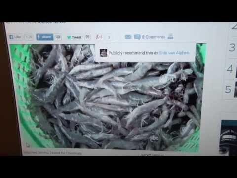 Shrimps can cause health problems.
