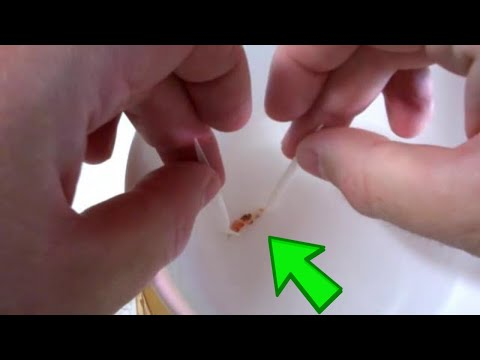 HOW TO :Saving The Eggs From A Dead Crystal Red Shrimp 🦐 (видео)