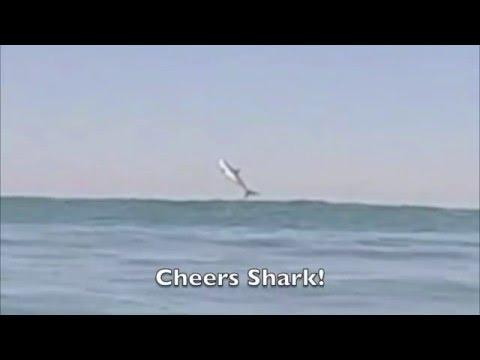 Surfer Films a Shark...Jumping?