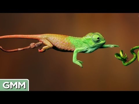 camouflaged - The most amazing animal camouflage in the world! GMM 334! Good Mythical MORE: http://bit.ly/MoreDisguises SUBSCRIBE for daily episodes: http://bit.ly/subrl2 ...