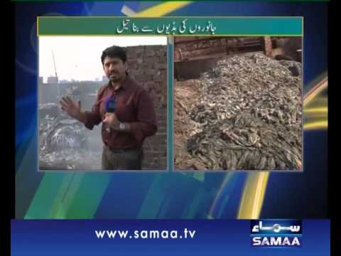 Hum Log, Janwaron ki hadiyun say tayar honay wala oil aur soap, 15 Nov 2013