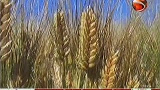 Wheat Blast