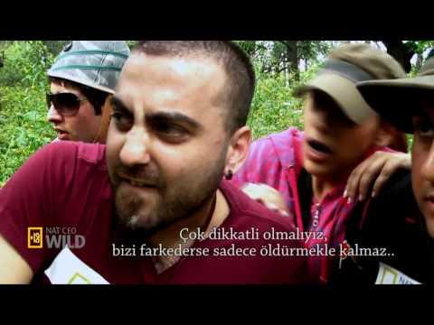 Günah_Keçisi__HD_.mp4 (видео)