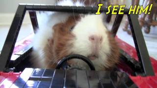 "Cute guinea pigs drive their own spy car and save the world, or at least their lettuce! (""Guinea Pig Heroes!"")"