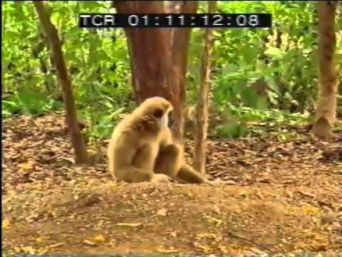 Video टाइगर और बंदर लड़ाई अजीब अजीब वीडियो download in MP3, 3GP, MP4, WEBM, AVI, FLV January 2017