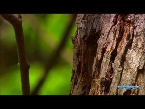 Болгария (Bulgaria) - Невероятные путешествия (Ultimate Journeys) (видео)