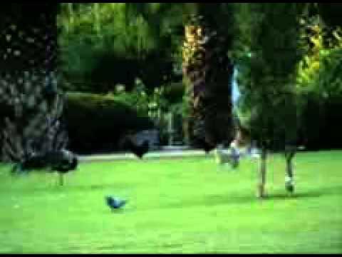 Parque de la Paloma - Entrada al parque Video