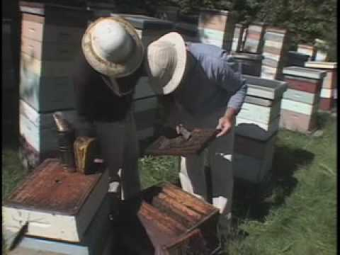 Champlain Valley Apiaries – Middlebury, VT