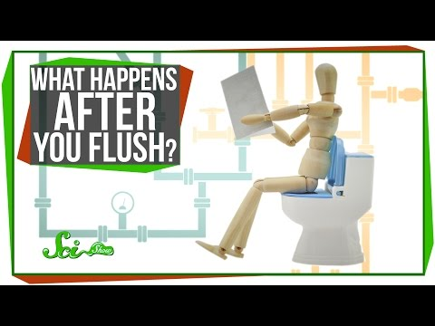 What Happens After You Flush