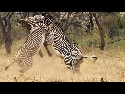 Best of African Animals | Top 5 | BBC Earth