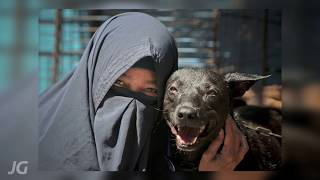 Video In the Name of Love : Story of a Muslim Dog Lover MP3, 3GP, MP4, WEBM, AVI, FLV Maret 2019