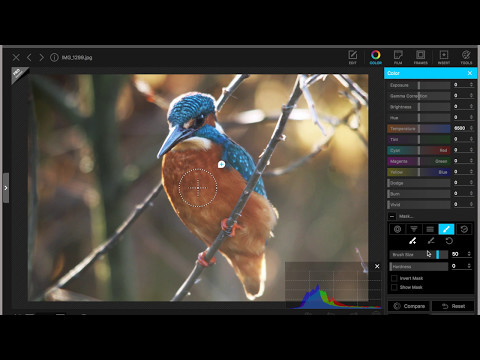 Editing a Kingfisher photo in Photoscape X Free