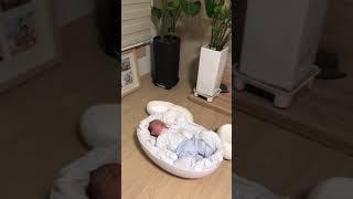 video thumbnail BabyLoha LOHA EGG - Smart SET Newborn Infant Baby Bed Memory Foam Portable Sleep youtube