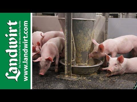 CCM Futterautomaten im Test | landwirt.com