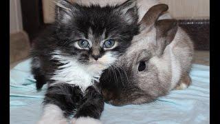 Funny kitten. Patient rabbit./Смешной котенок. Терпеливый кролик.