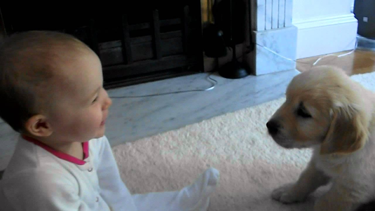 Beba i mali pas – prvi susret i upoznavanje