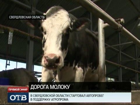 """На Среднем Урале стартовал автопробег """"Дорогу молоку!"""""""