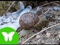 La Eduteca - Los moluscos - YouTube