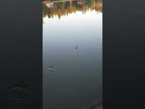 Видеоотчет о рыбалке за 08 июля 2021 г.