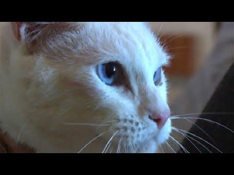 Achilles: Taube Katze wird offizielles WM-Orakel