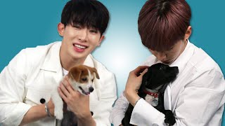 Video Monsta X Plays With Puppies While Answering Fan Questions MP3, 3GP, MP4, WEBM, AVI, FLV Oktober 2018