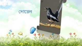 The Most Popular Birds Name - Bangla