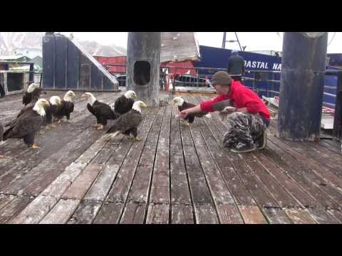 Alaskan Man Scatters Fish to an Incredible Flock of Hungry Bald Eagles in Dutch