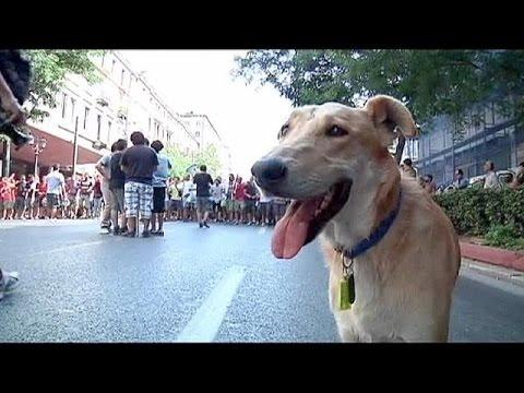 كلب  يتظاهر ويهاجم العسكر فى اليونان