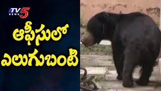 ఆఫీసులో ఎలుగుబంటి..! | Bear Hulchul in BSNL Office At Karimnagar