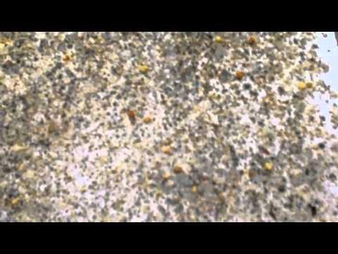 RicsBees Backyard Beekeeping Hive 1