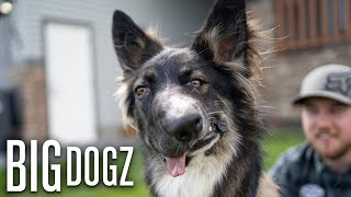Brodie The 'Wonky Faced' Dog Proves It's Okay To Be Different | BIG DOGZ by Barcroft Animals