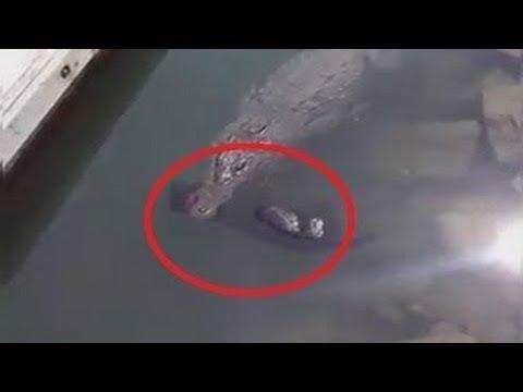 العرب اليوم - شاهد: لحظات صادمة التقطتها الكاميرات أثناء الصيد