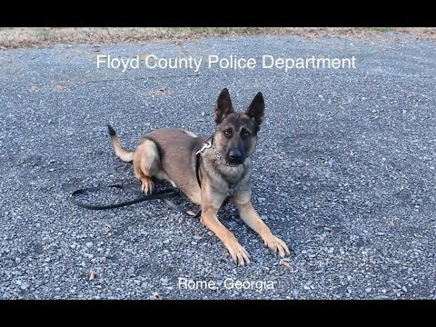 VIDEO: Floyd County Police Introduces New K9 Officer
