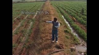 Tomato Farmer (Jaivik)