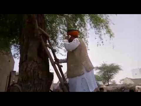 Union Minister climbs tree to get mobile phone signal
