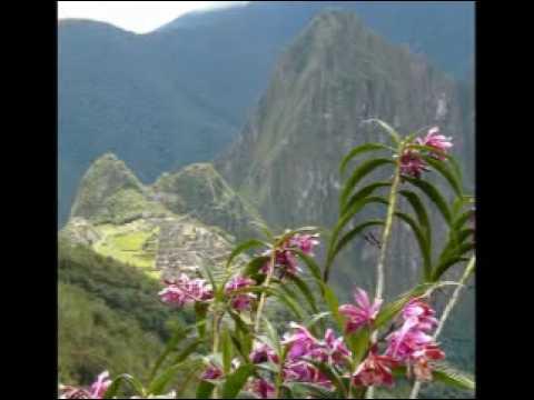 Tropische Orchideen: Peru - orchids of peru