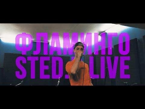 STED.D – ФЛАМИНГО (LIVE)