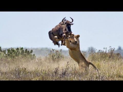 Животные у которых получилось избежать гибели