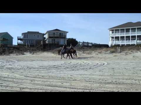 Horses on the Beach - Emerald Isle, NC