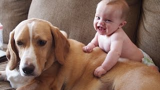 Cute Cats and Dogs Love Babies Compilation 2014 [NEW HD]