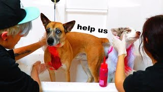 Dyeing Our Dogs for Valentines Day!!! by Tyler Rugge